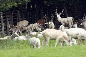Charakteristika lesní správy Hořice